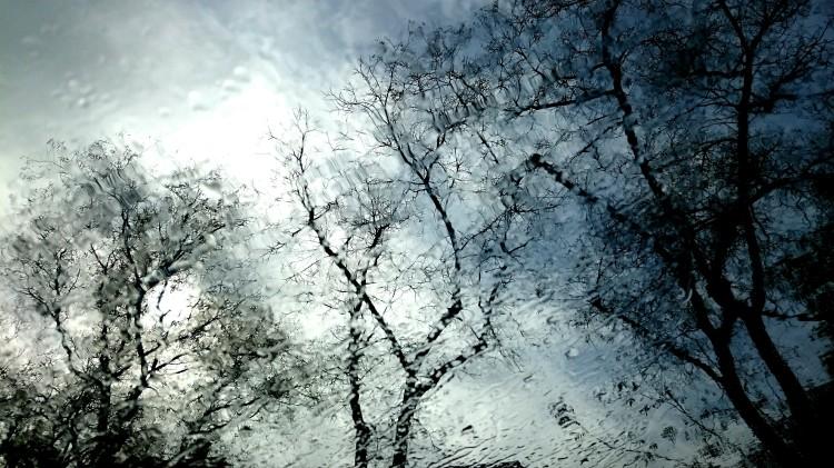 Windscreen, trees, rain, and Jazz trio on the radio