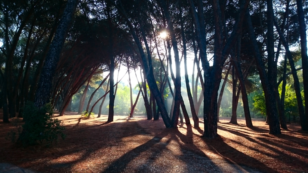 Early morning woods, Casa de Campo, Madrid