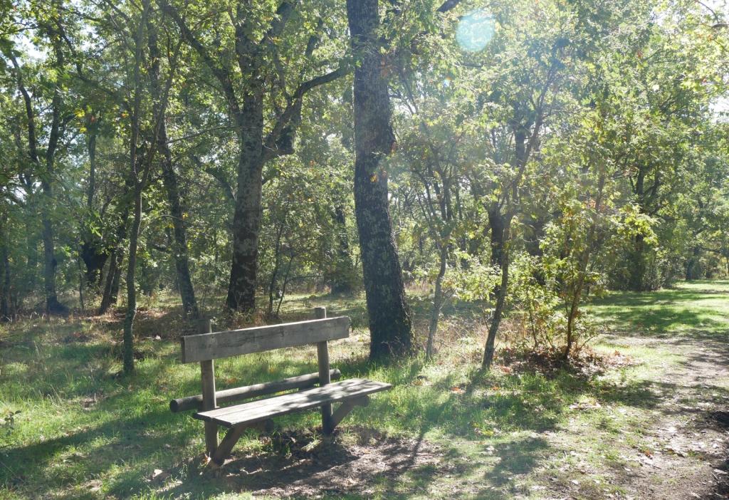 Bench, oak woods, El Escorial
