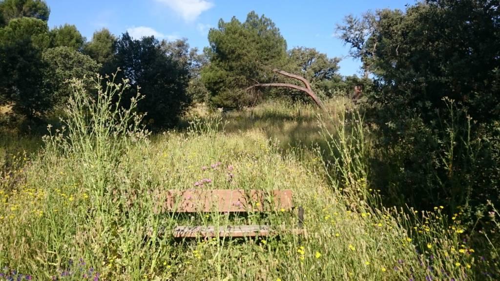Park Bench, Casa de Campo